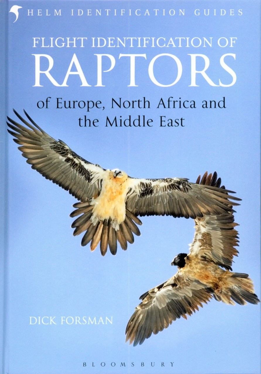 Flight Identification of Raptors Image