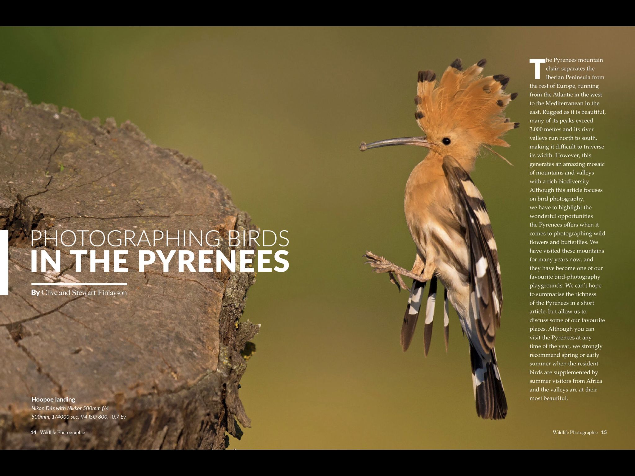 Photographing birds in the Pyrenees Image