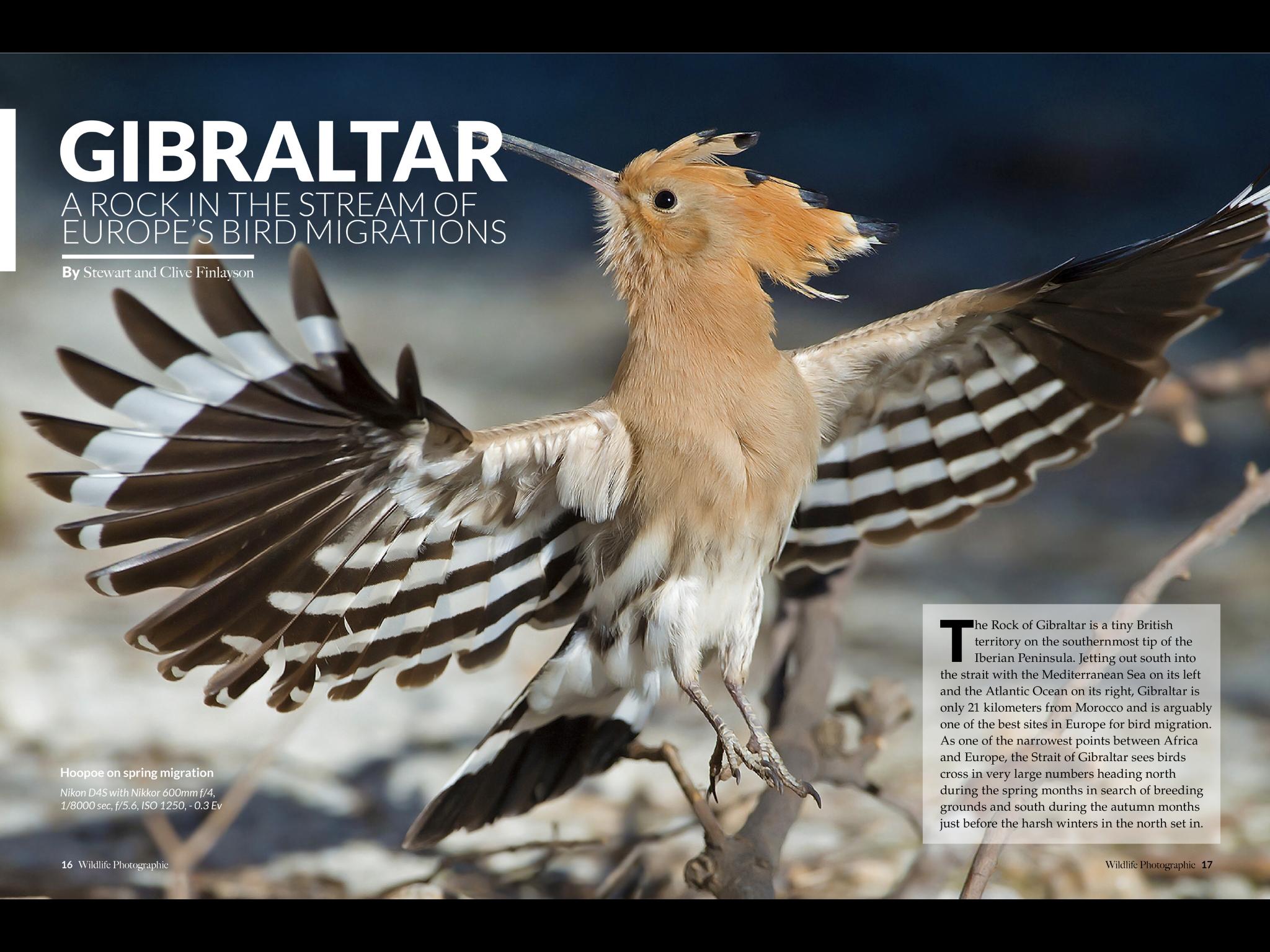 Gibraltar Wildlife Photographic Image